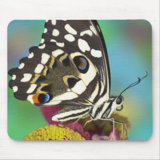 Sammamish, Washington Tropical Butterfly 5 Mouse Pad