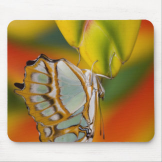 Sammamish, Washington Tropical Butterfly 7 Mouse Pad