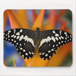 Sammamish, Washington Tropical Butterfly 9 Mouse Pad