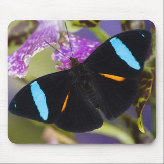 Sammamish, Washington Tropical Butterfly Mouse Pad