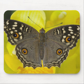 Sammamish Washington Tropical Butterfly Mouse Pad