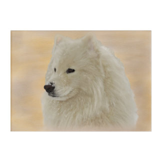 Samoyed Wall Art; Original Painting Acrylic Print