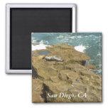 San Diego Sunbathing Seal Magnet