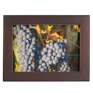 Sangiovese grapes in a vineyard keepsake box