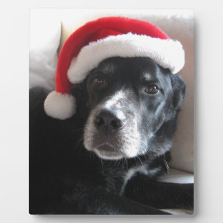 Santa Dog-Labrador Rottweiler Mix Plaque