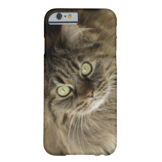 Santa Fe, New Mexico, USA. Maine coon cat. (PR) Barely There iPhone 6 Case