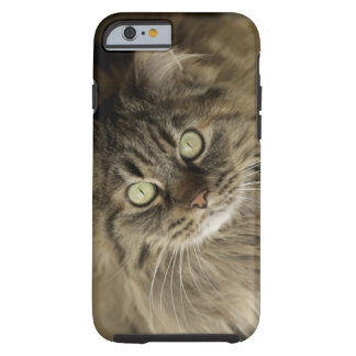 Santa Fe, New Mexico, USA. Maine coon cat. (PR) Tough iPhone 6 Case