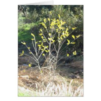 Santiago Plant Series Card