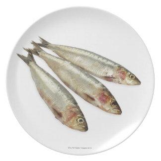 Sardines (Pilchards) Dinner Plates