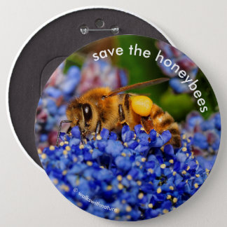Save the Honeybees Pollinating California Lilac 6 Cm Round Badge