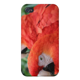 Scarlet Macaw Cases For iPhone 4
