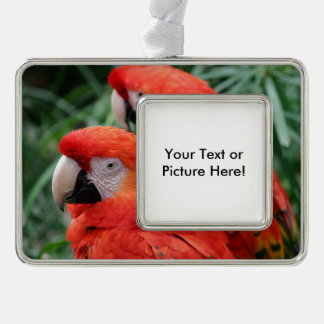 Scarlet Macaw Silver Plated Framed Ornament