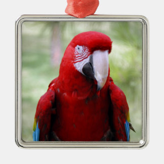 Scarlet Red Macaw Christmas Ornament