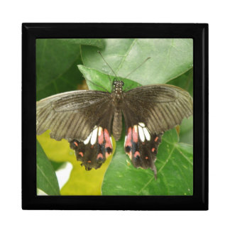 Scarlet Swallowtail Butterfly Gift Box
