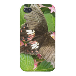 Scarlet Swallowtail Butterfly Macro iPhone Case Cases For iPhone 4
