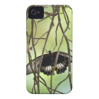 Scarlet Swallowtail butterfly (Papilio iPhone 4 Case-Mate Case