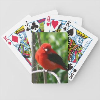 Scarlet Tanager Bicycle Playing Cards