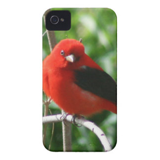 Scarlet Tanager Case-Mate iPhone 4 Case