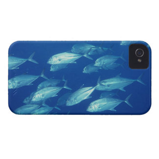 School of Fish 4 Case-Mate iPhone 4 Cases