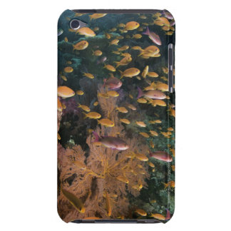 Schooling Fairy Basslets iPod Touch Case-Mate Case