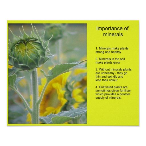 Science Importance of minerals Print