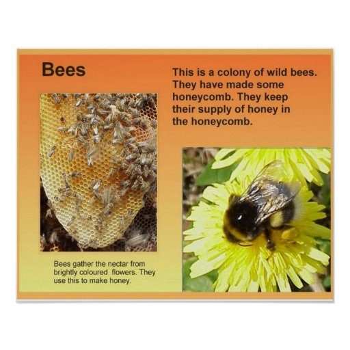 Science, Life science, Bees Posters