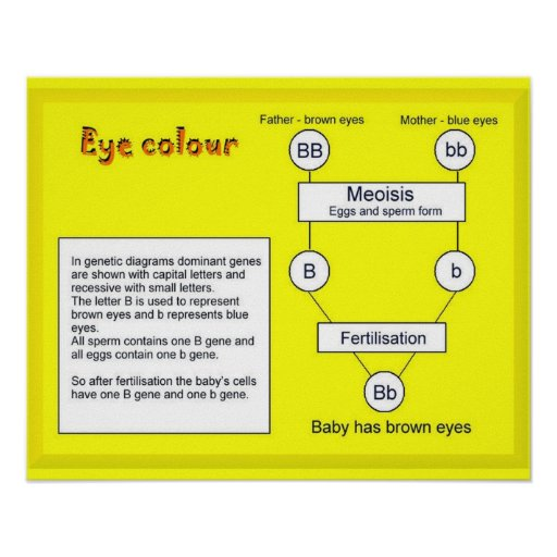 Science, Life Science, Eye Colour Poster