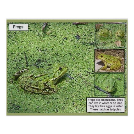Science, life science, frogs poster