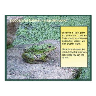 Science, Successful Habitat, Pond Postcard