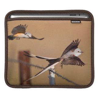 Scissor-Tailed Flycatchers (Tyrannus Forficatus) iPad Sleeve