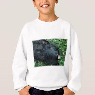 Scottish Terrier in Grass  - Cute Scotty Sweatshirt