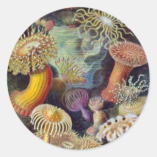 Sea Anemones Classic Round Sticker