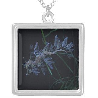 Sea Dragon Square Pendant Necklace