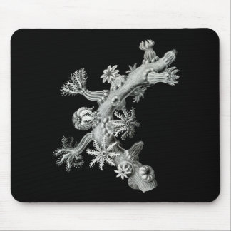 Sea fan mouse pad