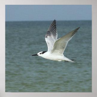 Sea Gull in Flight Canvas Print