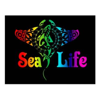 Sea Life Manta Ray Postcard