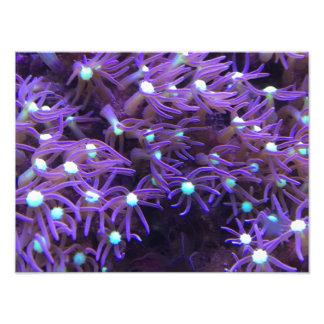 Sea Life Purple Picture Photo Print