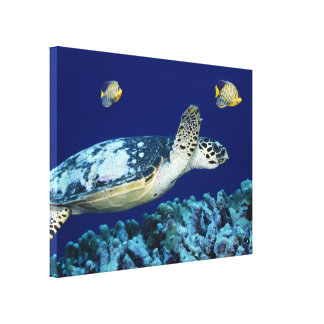 Sea Life Sea Turtle Canvas Print Stretched Canvas Print
