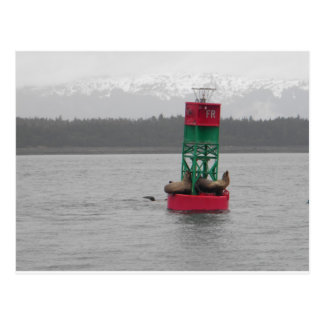 Sea Lions in Juneau, Alaska Postcard