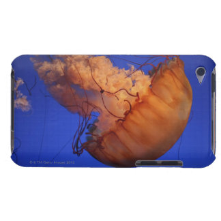 Sea nettle jellyfish iPod Case-Mate case