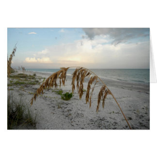 Sea Oat At Sunset Cards