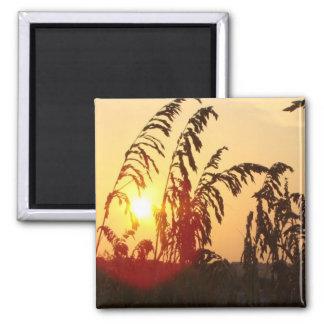Sea Oat Sunrise Square Magnet