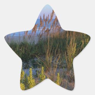 Sea Oats and Beach Elder Star Sticker
