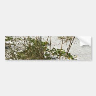 Sea oats and other beach vegetation car bumper sticker