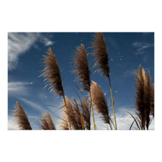 Sea Oats and Stars Poster