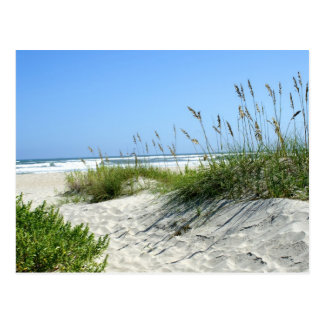 Sea Oats at Ocracoke Postcards