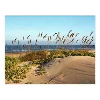 Sea Oats & Dunes Postcard