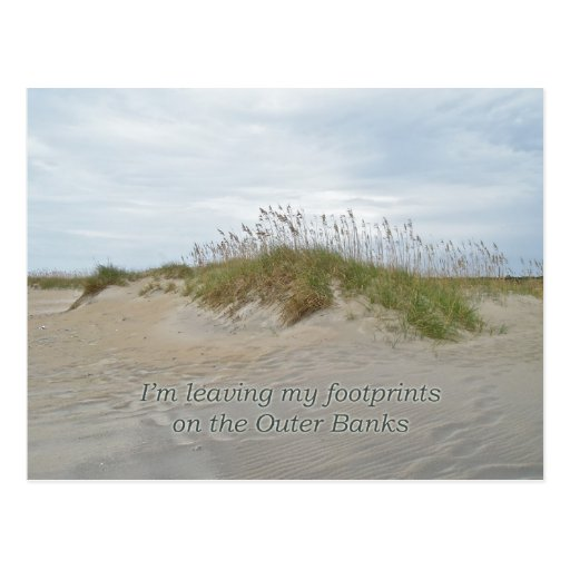 Sea Oats on Sand Dune Outer Banks NC Post Card