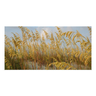 Sea Oats on the beach photo card