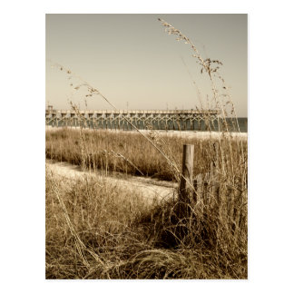 Sea Oats on the Dunes at Myrtle Beach Postcard